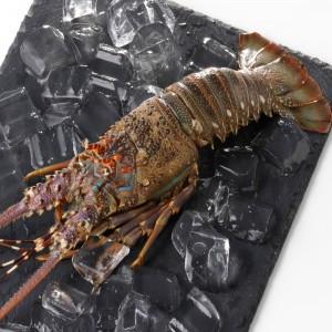 野生龍蝦(150-200g/包)